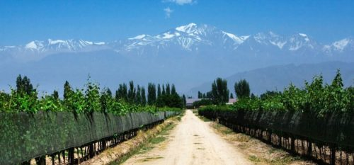 Best Wine Regions of the World to Visit - Mendoza, Argentina | Wine Regions to Visit in Argentina