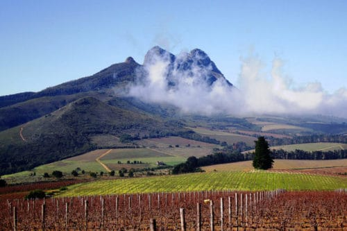 Stellenbosch South Africa Wine Region | Best Wine Regions to Visit in South Africa