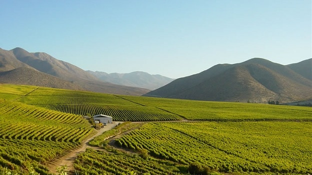 Limarí Valley, Chile | Winetraveler.com
