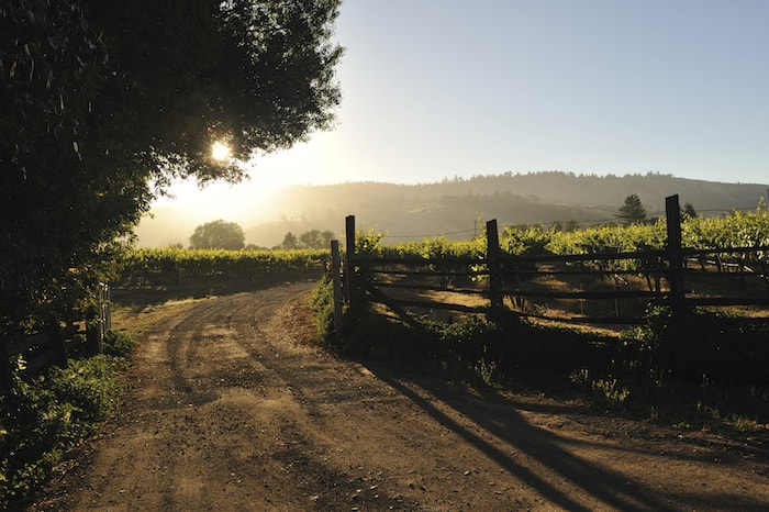 Best Up and Coming Wine Regions All Over the World   Winetraveler.com