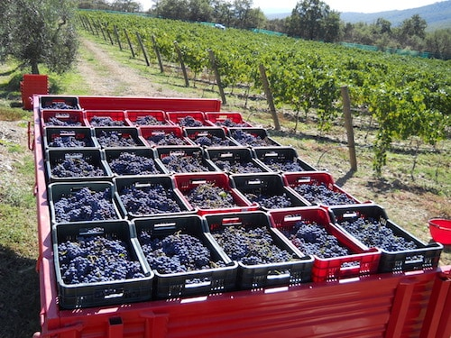 Starting a Winery and Owning a Vineyard   Winetraveler.com