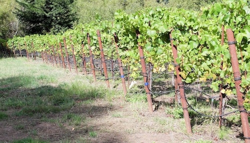 Bohemian Highway Wine Route in Sonoma's Russian River Valley | Winetraveler.com