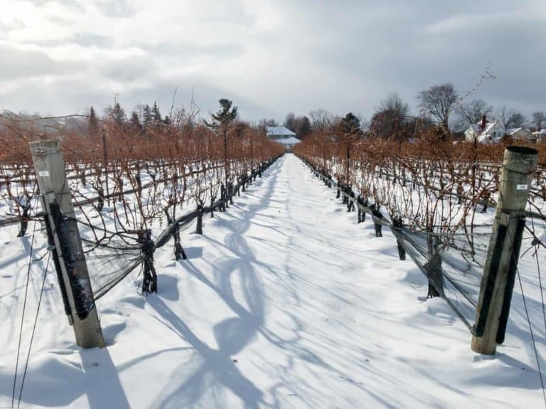 Ontario Wine Country Guide - Where To Eat and Drink and the Best Wineries and Hotels in Ontario | Winetraveler.com