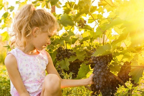 Can I Bring My Child To a Winery? | Winetraveler.com
