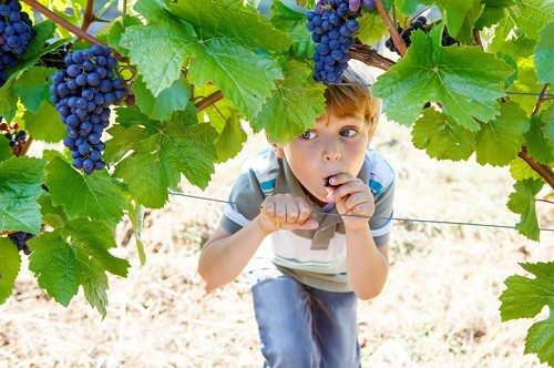 What To Do With Children During a Winery Tour or Visit