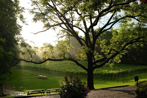 Top Wineries in Virginia a Short Drive From Washington DC | Winetraveler.com