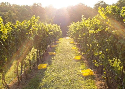 Best Wineries Near DC - Naked Mountain Winery | Winetraveler.com