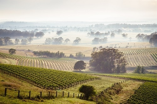 Australian Wine Regions are incredibly diverse and varied.