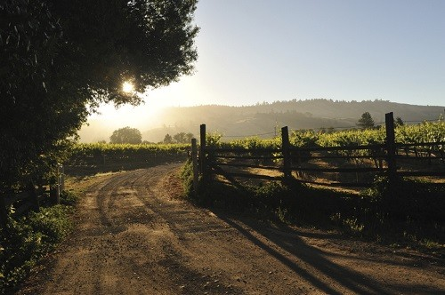 The Best Anderson Valley Wineries | Winetraveler.com