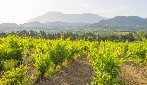 The island of Sardinia offers a wine tourism experience unlike any other.