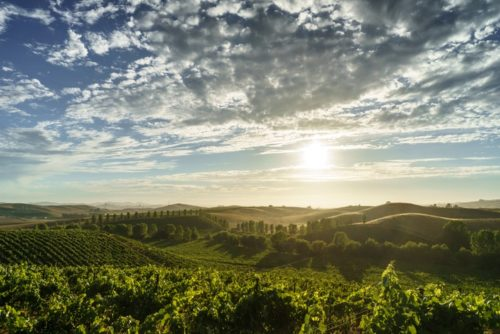 Sonoma Itinerary: Best Things To Do and Where To Stay in Sonoma